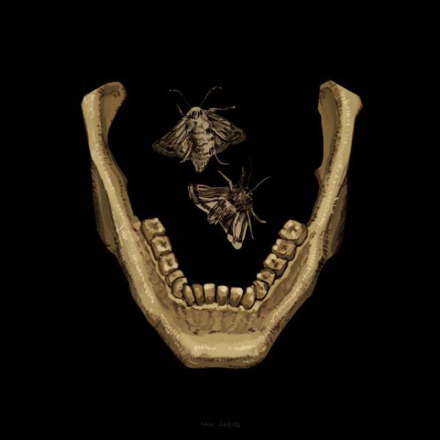 2-D рисунок нижней челюсти.