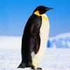 Андрей Либенко