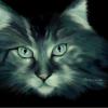 Кошка Лунная