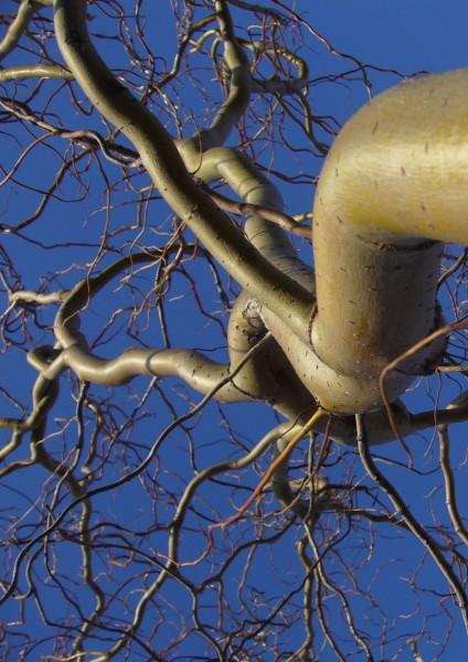 корнями в небо