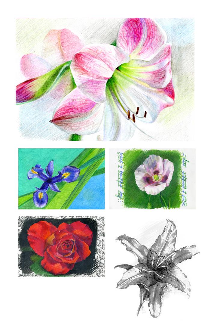 Рисунки цветов для набора открыток