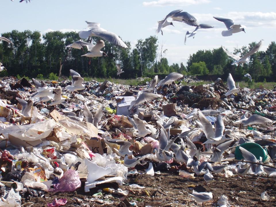 Осторожно — бытовые отходы (сео)