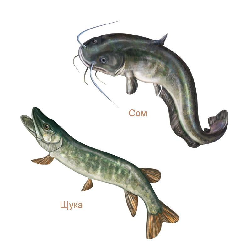 Рисунки рыб для упаковки