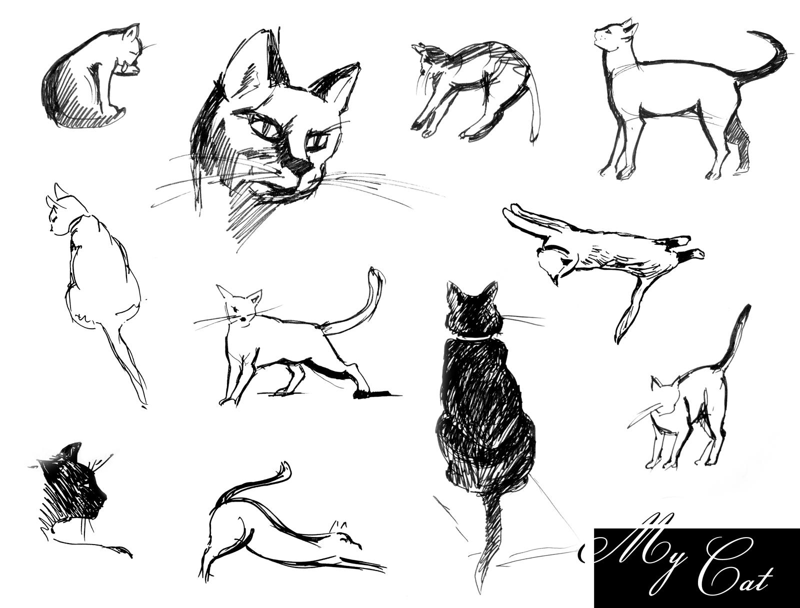 картинки рисунки в движении животные набросок