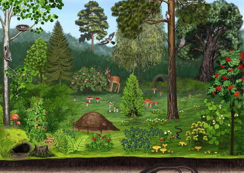 Картинка леса для детей для занятия