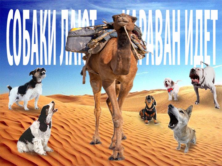 Картинка с надписью собака лает а караван идет, для открытки февраля