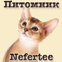 Nefertee: продвижение питомника кошек в социальных сетях