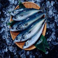 Свежемороженая рыба в СПб оптом (Главная)