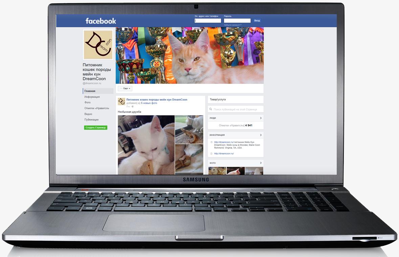 Питомник кошек. Фейсбук.