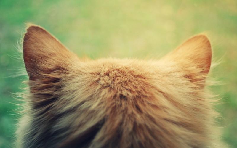 Слоган для ВИЗИТКИ по уходу за домашними животными