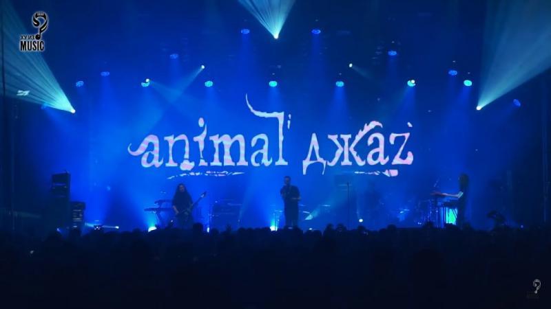 Animal ДжаZ - Дыши