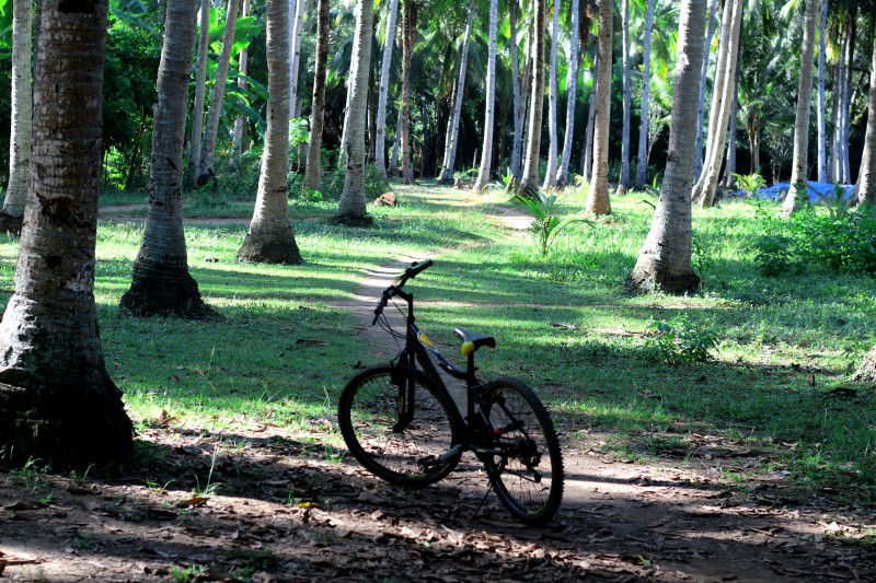 Прогулка в тропическом лесу