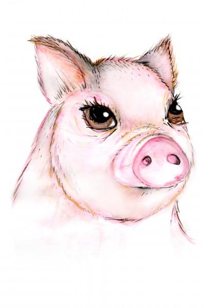 Иллюстрация свинья