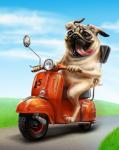 Пёс на скутере