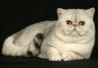 Кошечки))))