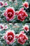 """Стилизация """"Розы"""""""