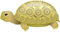 Черепаха. Векторная графика.