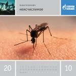 Загадка Газпромнефти. Календарь. Неисчислимое