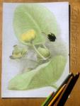 иллюстрация кувшинки zolotaryova