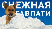Снежная Гав Пати