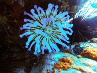 Лучшие места для дайвинга на острове Тенерифе