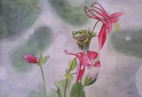 Лягушка и цветы