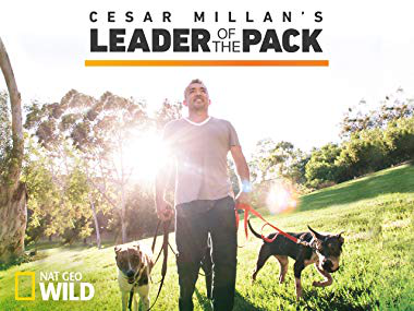 NATIONAL GEOGRAPHIC Cesar Millan's Leader Of The Pack: MilesToGo