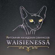"""Питомник кошек """"Waisienessa"""""""