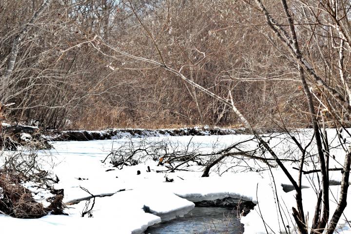 Река в марте