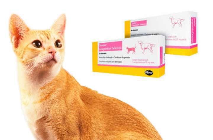 Какие антибиотики можно кошкам и как их давать