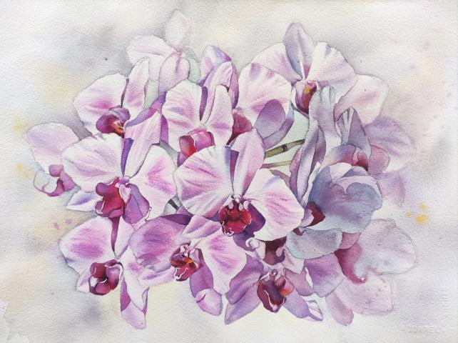 Картина акварелью Орхидея на свету