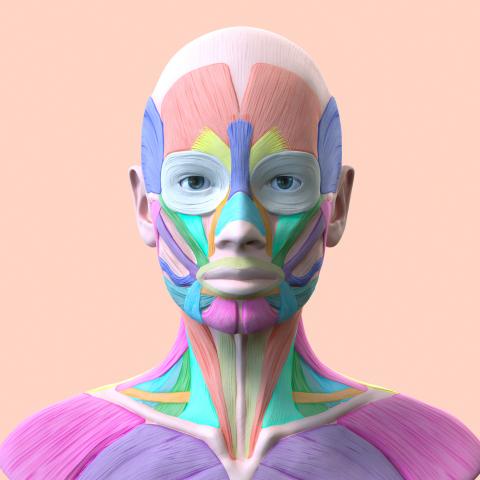 анатомия женского лица